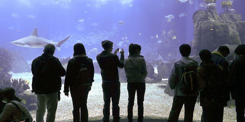 Oceanario Lisboa Besucher